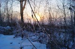 Солнце rize Стоковое Фото
