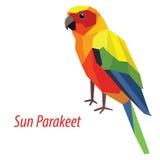 солнце solstitialis parakeet conure aratinga Стоковое Изображение RF