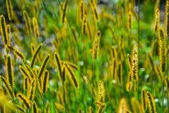 Солнц-облитая трава Стоковая Фотография RF
