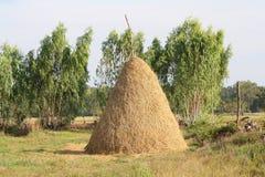 Солома в поле риса Стоковое Изображение RF