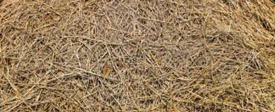 Солома риса стоковая фотография rf