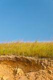 Солома сухой травы Yelow Стоковое фото RF
