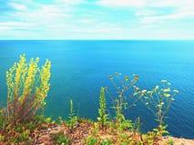 Солома травы на точке зрения выше уровень моря Черенок в цветении Стоковые Фотографии RF