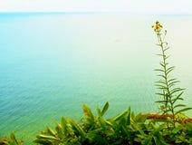 Солома травы на точке зрения выше уровень моря Черенок в цветении Стоковое фото RF