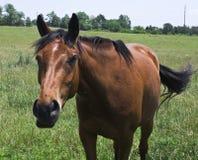 содружественная лошадь Стоковые Фотографии RF