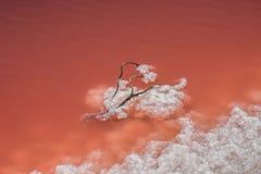 Соль в красной воде Стоковые Изображения RF
