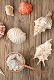 Соль и раковина моря на древесине стоковая фотография rf