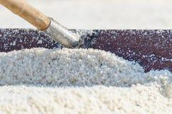 Соль моря сопротивления бороны в процессе сбора Стоковые Изображения