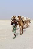 Соль нося каравана верблюдов в пустыне ` s Danakil Африки, Эфиопии Стоковые Изображения RF