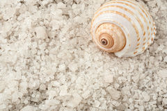 Соль раковины и моря стоковая фотография rf