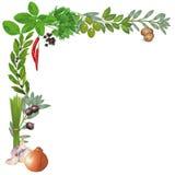 соль rosemary перца листьев трав чеснока cardamon залива spices ваниль бесплатная иллюстрация