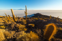 Соль Uyuni плоское на боливийских Андах на восходе солнца Стоковое фото RF