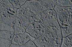 Солёные следы стоковое изображение rf