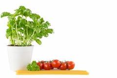 Спагетти макаронных изделий с едой итальянки томатов Стоковое Фото