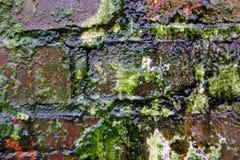 спад 2 цветов Стоковая Фотография RF