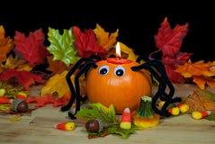 Спайдер тыквы осени Стоковая Фотография