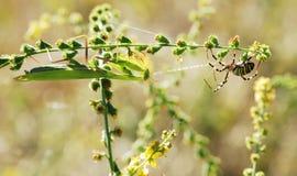спайдер mantis против Стоковое Изображение RF