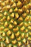спайки durian стоковая фотография