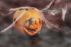 спайдеры тыквы halloween Стоковая Фотография RF