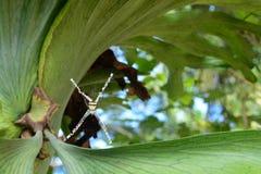 Спайдер в паутине Стоковая Фотография