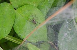 Спайдер на листьях Стоковые Фото