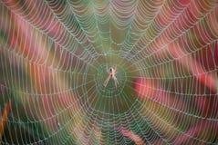 Спайдер на сети Естественная ловушка Фото живой природы Стоковая Фотография