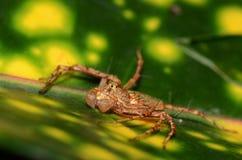 Спайдер сидя в зеленых лист Стоковое Фото