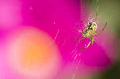 Спайдер среди цветков Стоковое Изображение