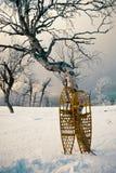 Snowshoes полагаясь против snowscape дерева березы Стоковые Изображения