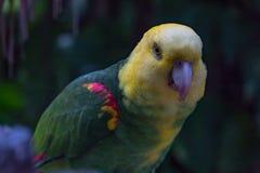 Спасают красочные одичалые птиц от противозаконных предпринимателей любимчика стоковое фото