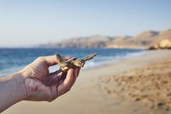Спасение зеленой черепахи стоковое фото rf