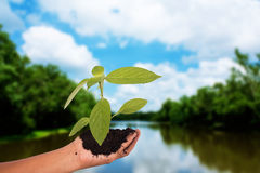 Спасение концепции мир, женщины руки держа дерево Стоковая Фотография RF