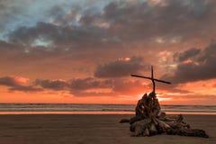 Спасение пня дерева Стоковые Фотографии RF