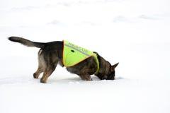 спасение собаки стоковые изображения