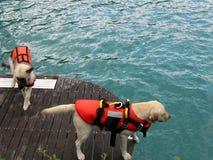 спасение собаки Стоковые Фото