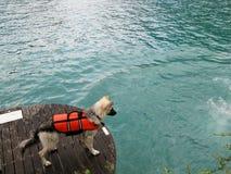 спасение собаки Стоковая Фотография RF
