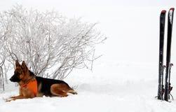 спаситель собаки Стоковое Изображение