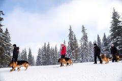Спасители спасательной службы горы с собаками спасения Стоковое фото RF