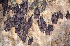 Спать бить на стене пещеры Бали Стоковая Фотография RF