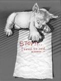 Спать и примечание щенят к стопу друга мне нужно Стоковое Изображение RF