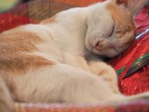 спать кота милый Стоковые Фото