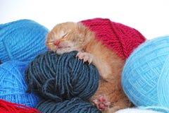 Спать кота младенца новорожденного Котенок цвета милых красивых маленьких немногих дней старый оранжевый cream Покинутое Newborn  Стоковая Фотография