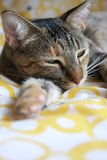 спать кота Стоковое фото RF