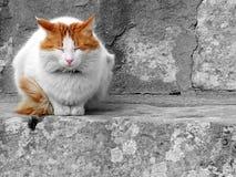 спать кота Стоковая Фотография RF