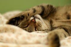 Спать кота Стоковые Изображения