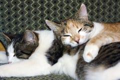спать кота Стоковые Фото