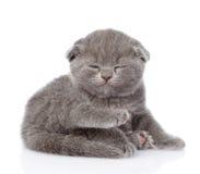 Спать котенка британцев Shorthair белизна изолированная предпосылкой Стоковое Изображение