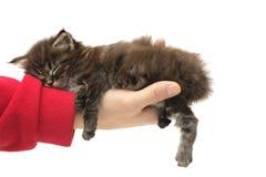 спать котенка руки малый стоковое изображение