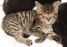 спать котенка стоковое изображение rf