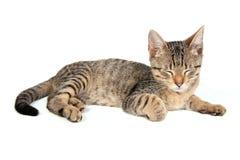 спать котенка Стоковое Фото